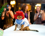 Cat dressed as Ragedy Ann at fashion show