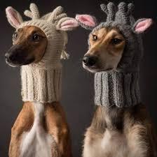 Giraffe Dog Costumes