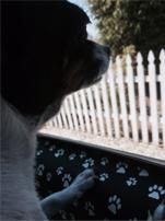 Ladybug Car Doggie No Slips