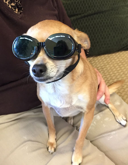 Solar Doggles for your pet