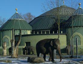 Elephant Poo Power
