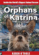 Orphans of Katrina book cover