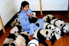 Woman surrounded by baby pandas