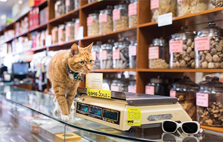 Tamar Arslanian and Shop Cats of New York on Animal Radio