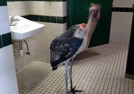 Stork In Bathroom