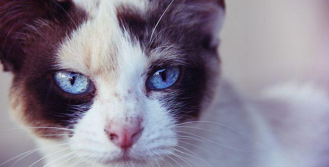 Switzerland Enacts New Animal Laws