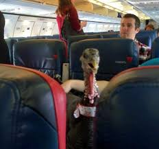 Turkey on a Plane