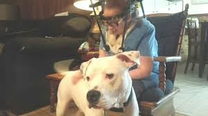 Banned Pit Bull Service Dog Allowed To Stay