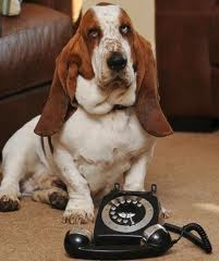 Basset dials for help