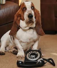 Basset dials for help