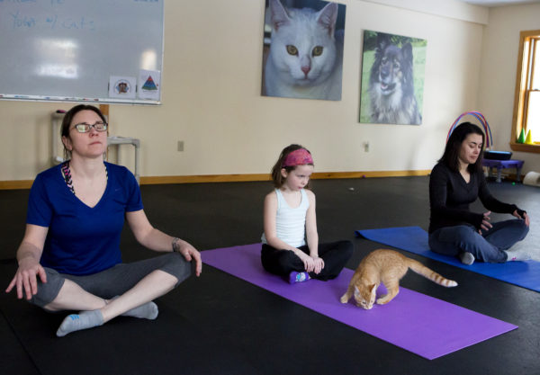 Yoga classes with cats
