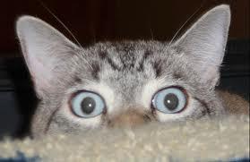 Cat Watching Sex