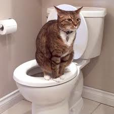 Cats in the bathroom