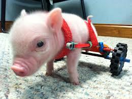 Chris P. Bacon is on Animal Radio®