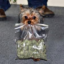 Dog in your stash