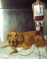 Do dogs have the same blood type as humans