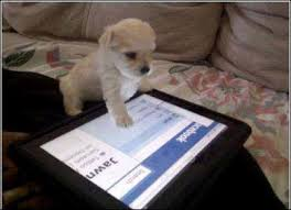 Teach your dog to use the iPad