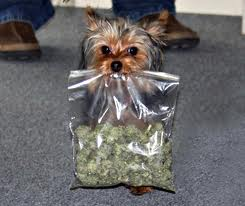 Dogs getting high?