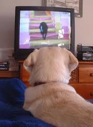 Dog TV?