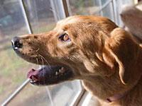 Dog Ownership Up