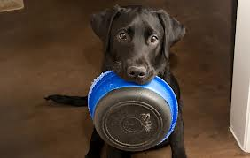 Food Stamps for Pets