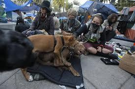 Parvo outbreak at Occupy SFO