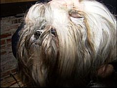 Dog Groomer Glue Ear