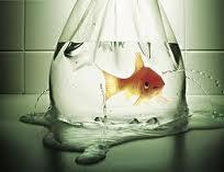 No More Goldfish