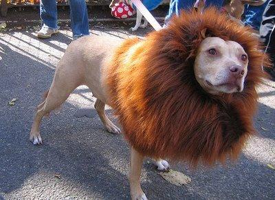 Halloween Lion Dog
