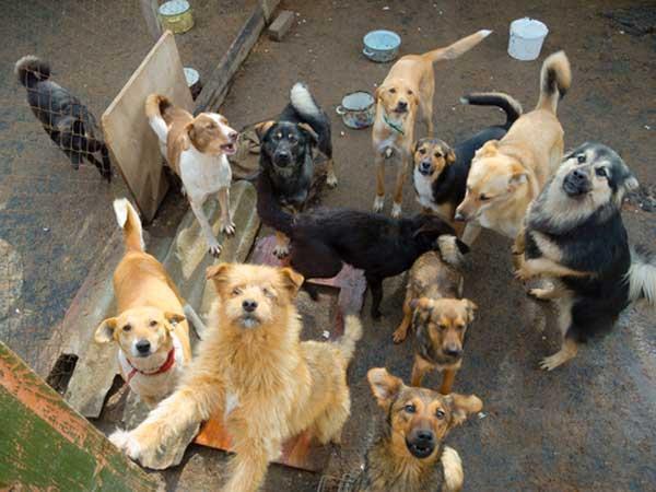 Dog Hoarders