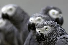 Parrot likes UB40