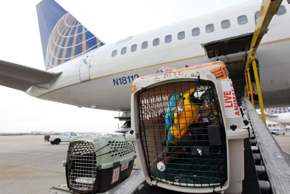 Pets on United Airlines