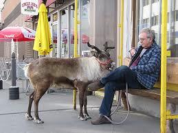 Reindeer Pet