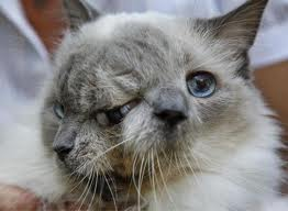 2 faced cat