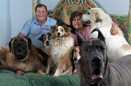 Actor Burt Ward shares his bed with 25 Great Danes - he tells his story on Animal Radio