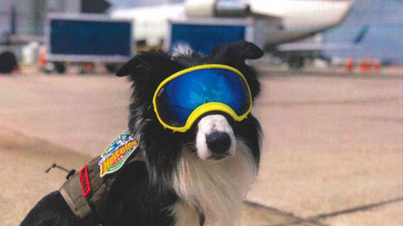 This border collie has a job at the airport