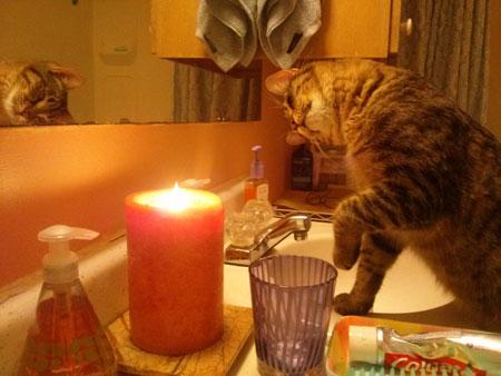 Pets start 1000 fires a year