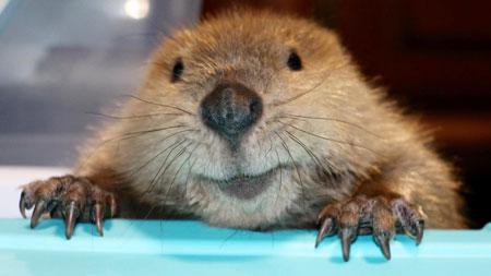 Justin Beavers Mom on Animal Radio