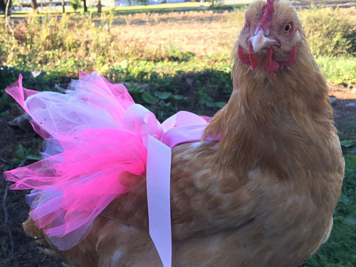 Julie Baker explains how she earns 50k a year making chicken clothes