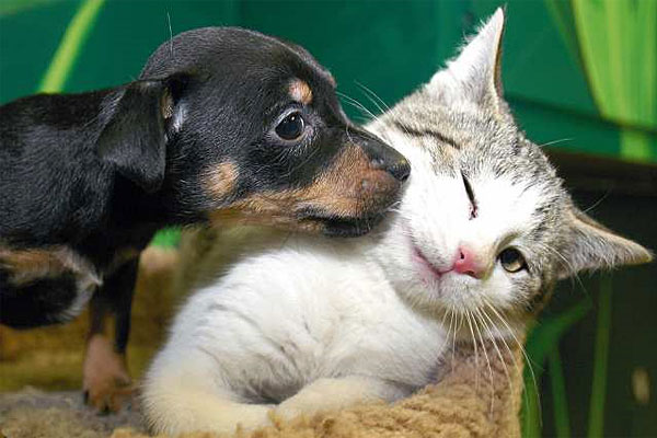 Who is smarter? The dog or cat?