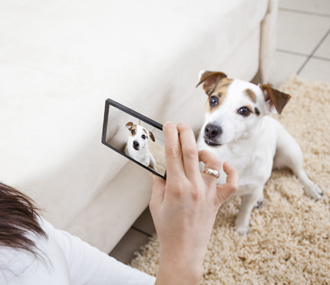 Taking Picture of Pet