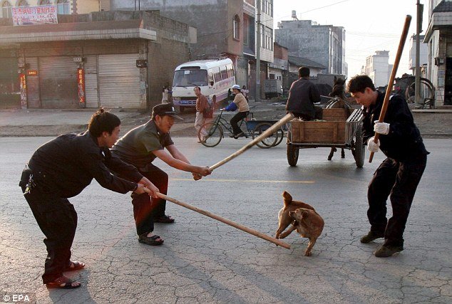 China bludgeoning dogs to death in citywide cull