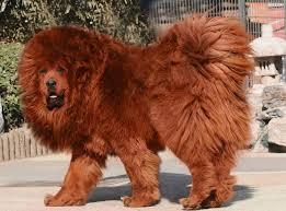2 million dollar dog