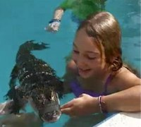 Girl swimming in pool with alligator.671