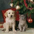 Dog and Cat under Christmas Tree