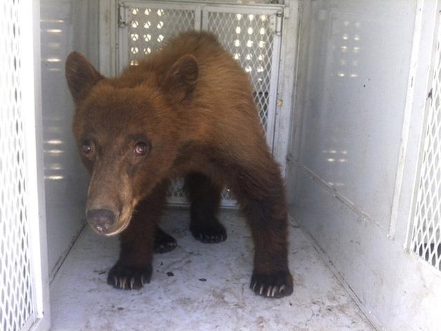 Bear at Graduation