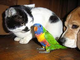 Cat, Bird and Dog