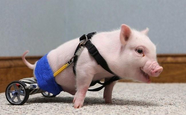 Bionic Animals on Animal Radio