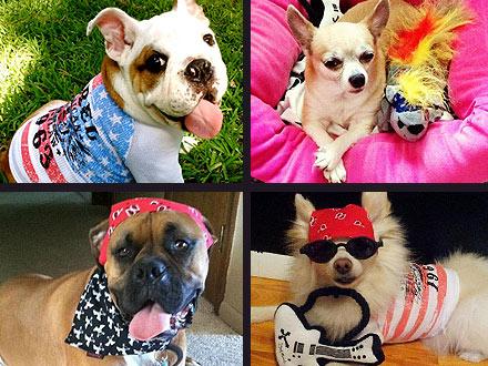 Bret Michaels Dog Accessories