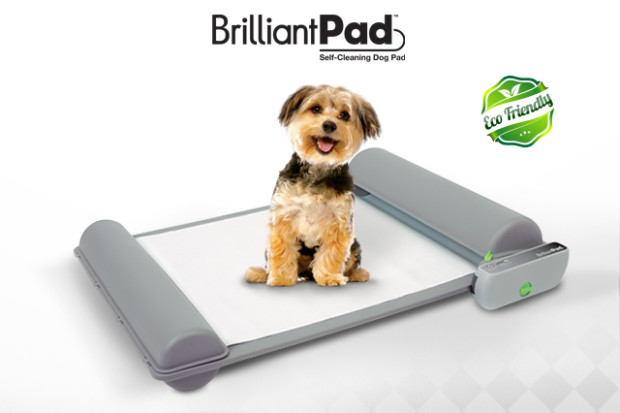 Win a Brilliant Pad this week